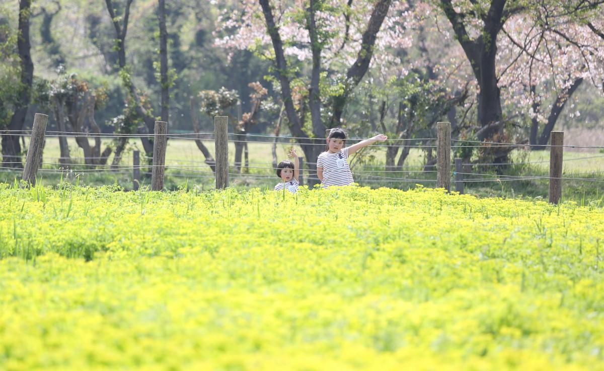 ☆春の公園フォト?☆